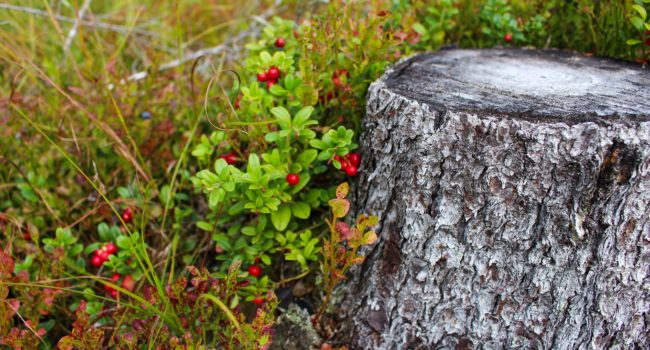 stump-1648566_1920